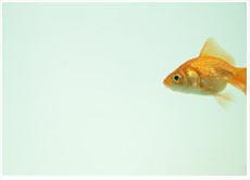Vissen naar Talent - Fons Leroy blogt